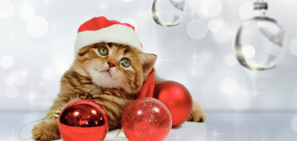Kitten Christmas Cards.Home Products Client Care Cards Christmas Cards