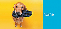 WH06 - Dog with Slipper