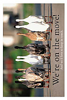 WM04 - Ducks Special